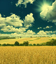Autumn landscape with wheat field and sunny blue sky countryside retro style picture Royalty Free Stock Photo