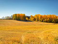 Autumn landscape yellow field and blue sky Royalty Free Stock Photos