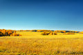Autumn landscape yellow field and blue sky Royalty Free Stock Photography