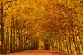 Autumn lane Royalty Free Stock Photo