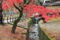 Autumn Laves At Nara Park In N...
