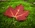 Stock Image Autumn Leaf