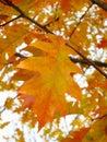 Autumn leaf background stock photos orange backgroundl bokeh brown foliage Stock Photography
