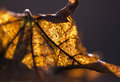 Autumn leaf beautiful closeup in the forest Royalty Free Stock Images