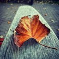 Autumn leaf on bench in Stock Photography