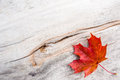 Autumn leaf a in in the board Royalty Free Stock Images