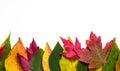Autumn leaf border Royalty Free Stock Photo