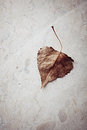 Autumn leaf brown on marble background Stock Photos