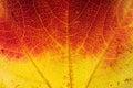 Autumn leaf, close up Royalty Free Stock Photo