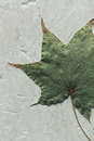 Autumn leaf close up of on marble background Stock Photography