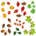 Autumn leaf, collection for designers Royalty Free Stock Photo