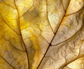 Autumn leaf detail Royalty Free Stock Photo