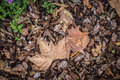 Autumn leaf detail in a park in Barcelona Catalonia Royalty Free Stock Photo