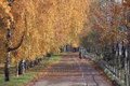 Autumn leaf fall landscape in city park Royalty Free Stock Photo