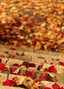 Autumn leaf fall. Red and yellow leaves on the destroyed old stone steps. Royalty Free Stock Photo