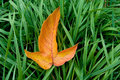 Autumn leaf on green grass Stock Photo