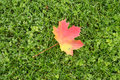 Autumn Leaf Lying On Grass