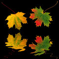 Autumn Leaf Movement Royalty Free Stock Images