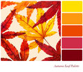 Autumn leaf palette Stock Photos