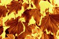 Autumn Leaf pattern Royalty Free Stock Photo