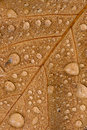Autumn leaf with raindrops Stock Photo