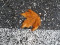 Autumn leaf on the road bright wet Royalty Free Stock Images
