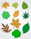 Autumn leaf set Stock Images