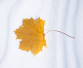 Autumn leaf in the snow winter Stock Images