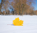 Autumn leaf in the snow winter Stock Image