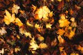 Autumn leaf in the sun. Detail in a path Royalty Free Stock Photo
