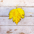 Autumn leaf texture background Royalty Free Stock Photos