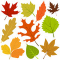 Autumn leaf vector Royalty Free Stock Image