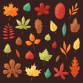 Autumn leaf vector autumnal leaves falling from fallen trees leafed oak and leafy maple or leafing foliage illustration Royalty Free Stock Photo