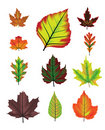 Autumn leaf vector set Stock Photos
