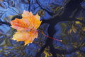 Autumn leaf on the water Royalty Free Stock Photo