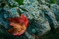 Autumn leaf by water's edge Royalty Free Stock Photo