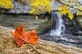 Autumn leaf and waterfall a reddish fallen rest on a fallen tree trunk with behind shot at indiana s mccormicks creek falls Stock Images