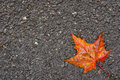 Autumn leaf on wet asphalt Stock Images
