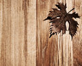 Autumn leaf wooden border Royalty Free Stock Image
