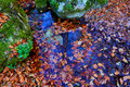 Autumn leafage in water scene with Stock Images
