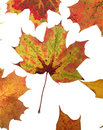 Autumn Leafs Royalty Free Stock Photography