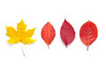 Autumn leafs Royalty Free Stock Photo