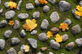 Autumn leafs on moss Stock Photography