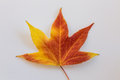 Autumn leave colourful on a white background Stock Photos