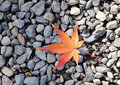 Autumn leave on the rocks Royalty Free Stock Photo