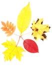 Autumn leaves 免版税库存图片