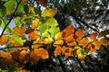 Jesenné lístie