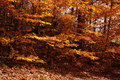 Autumn leaves Στοκ Φωτογραφία