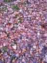 Autumn leaves Imágenes de archivo libres de regalías