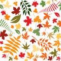 Podzim listy
